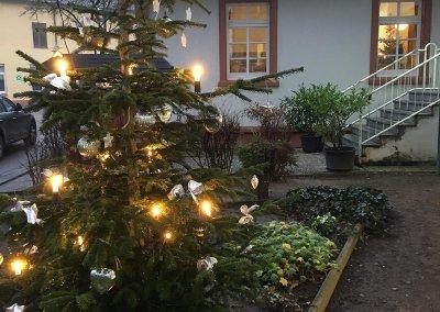 Weihnachtsbaum - Jährliche Spende